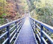 吊り橋渡り
